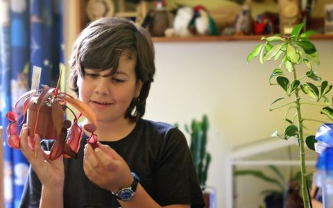 Carnivorous plants for kids, w/ Green Fingered George