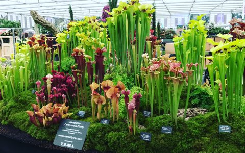 Catching up with Matt Soper of Hampshire Carnivorous Plants