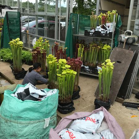 Specimen plants are loaded into the van for the 2017 Chelsea Flower Show.