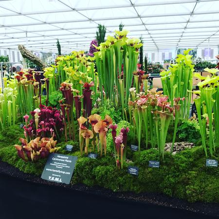 The finished display at the 2017 Chelsea Flower Show.