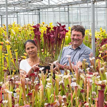 Matt and his wife Juthatip with Sarracenia cv. 'Juthatip Soper', a selected form of Sarracenia x mitchelliana.