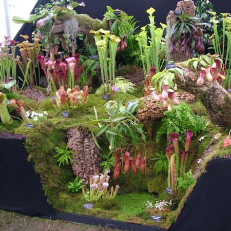 Hampshire Carnivorous Plants' display at Tatton Flower Show in 2007.
