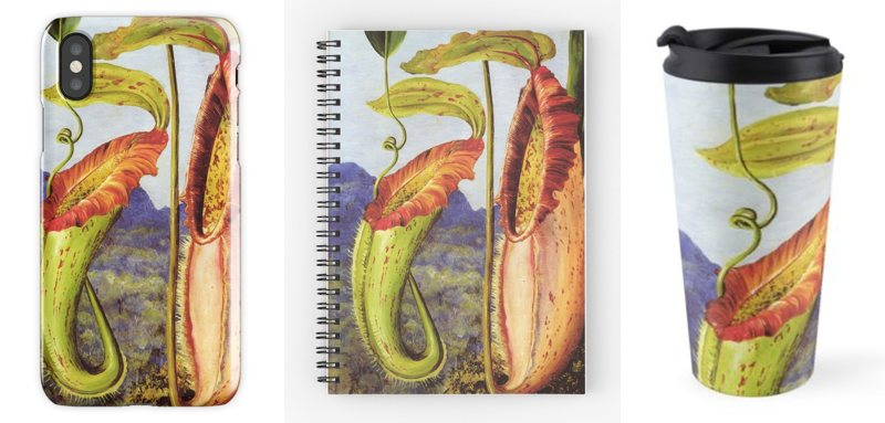 Nepenthes northiana on an iPhone X case, notebook, and travel mug,