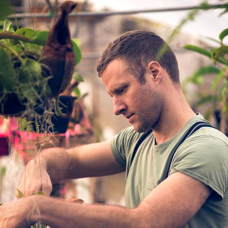 Ryan propagating young Nepenthes plants in the nursery.