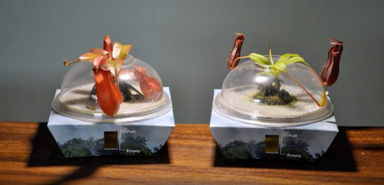 Nepenthes Bio-Domes, created by Borneo Exotics.