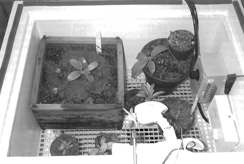 Figure 1: The ultra-highland environmental chamber with the transparent cover and overhanging lights removed to show the placement of the plants.