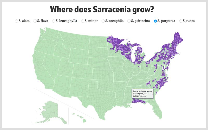 The Interactive Sarracenia Map showing the distribution of S. purpurea.