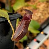 3. A pitcher on a typical small sale plant.